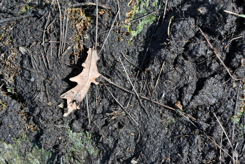 Oak weathered leaf on dirty wet ground background. Top view stock photos