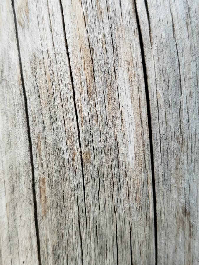 Oak wood rustic grey background tree outside royalty free stock images
