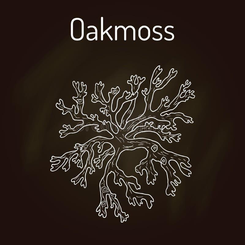 Oakmoss Evernia prunastri, medicinalväxt royaltyfri illustrationer