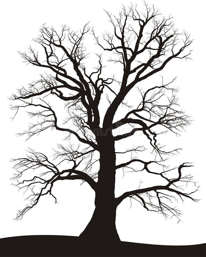 oaksommartree vektor illustrationer
