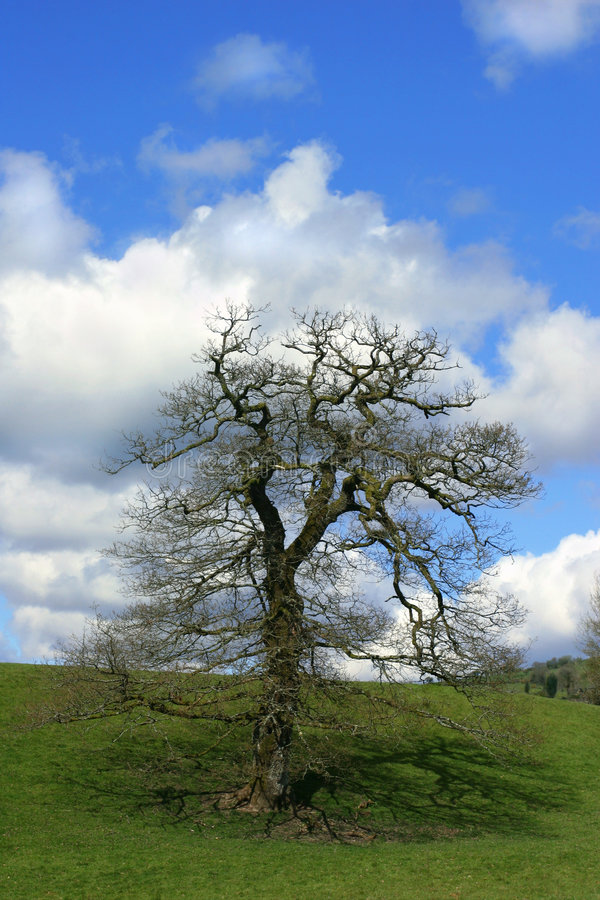 oakspringtime royaltyfri fotografi