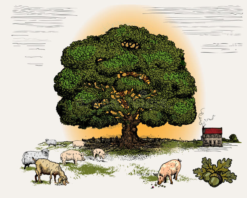 oaktree vektor illustrationer
