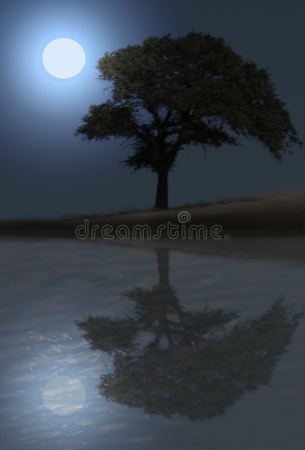 Oaktree alla notte immagine stock
