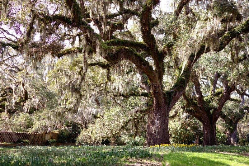 oaktree under royaltyfri fotografi