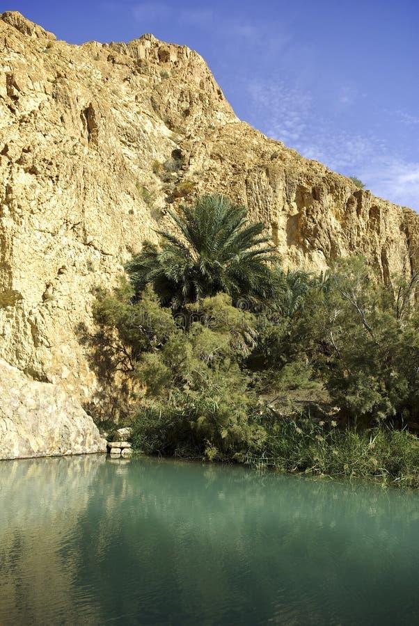 Oase in de Sahara stock afbeeldingen