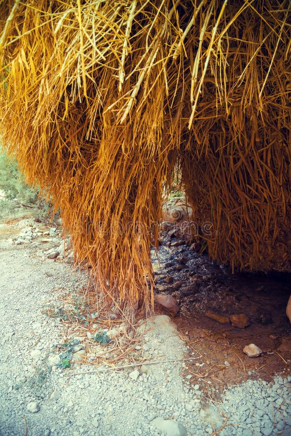 Oase in de Woestijn royalty-vrije stock fotografie