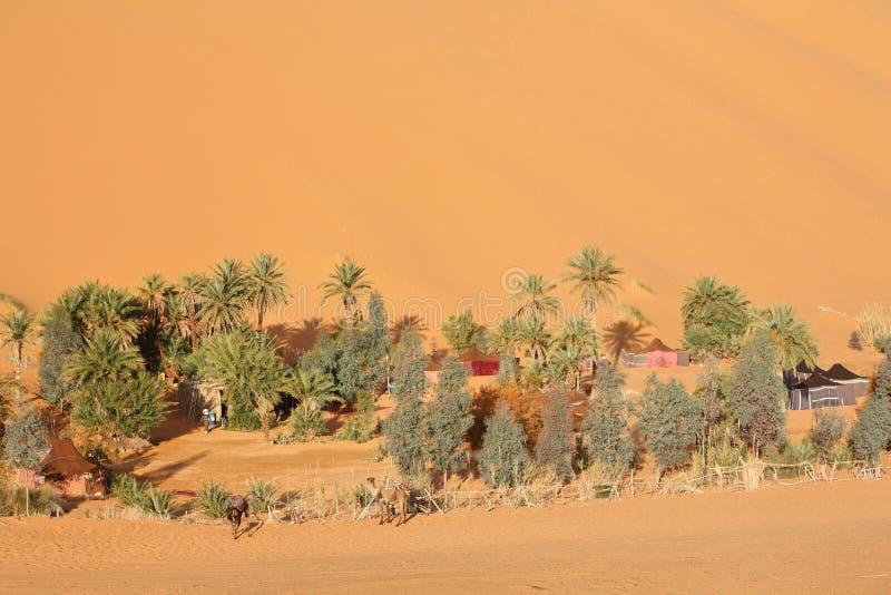 Oase in de woestijn van de Sahara stock foto's