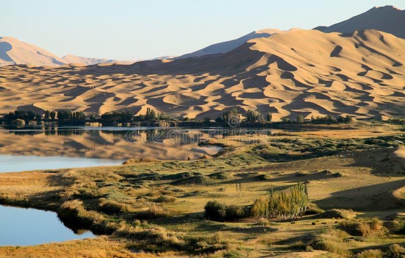Oase in der Wüste lizenzfreies stockfoto