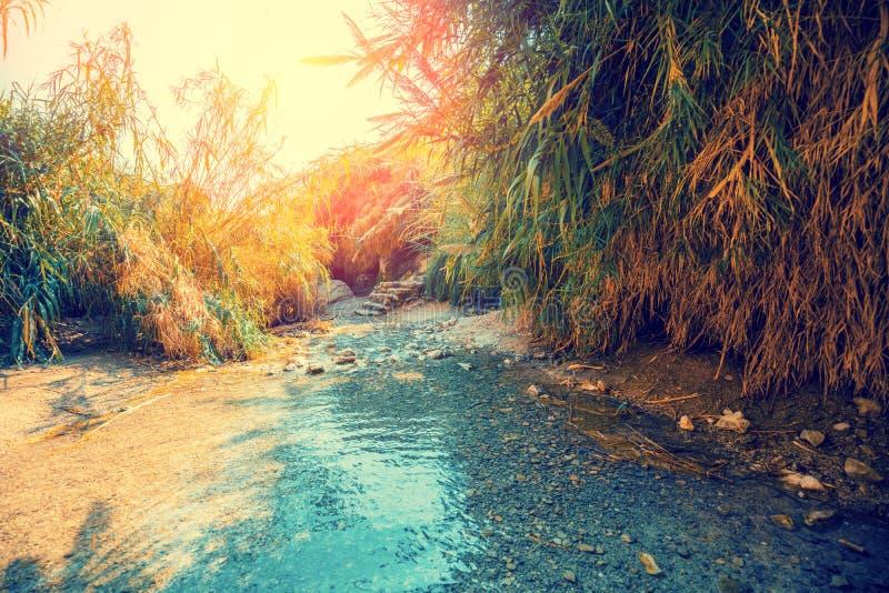 Oase in der W?ste Fluss Nahal David stockfoto