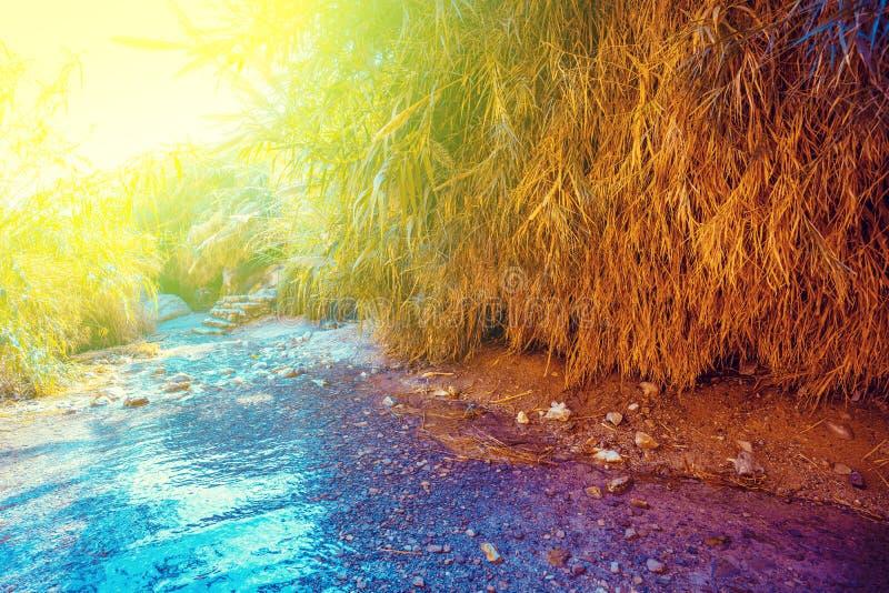 Oase in der W?ste Fluss Nahal David stockbild