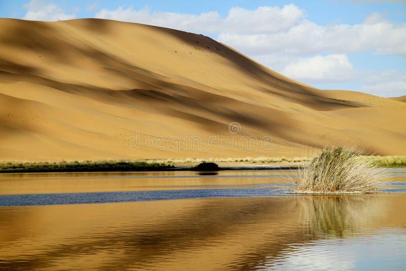 oase en duin stock afbeelding