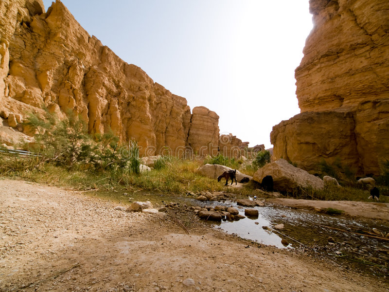 Oase op woestijn 1 stock fotografie