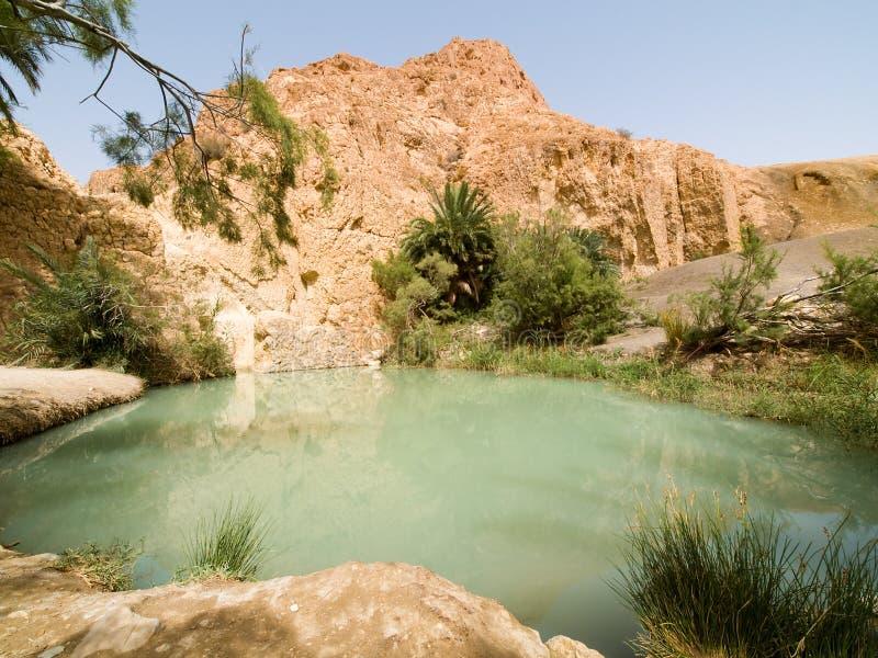Oase op woestijn 3 royalty-vrije stock afbeelding