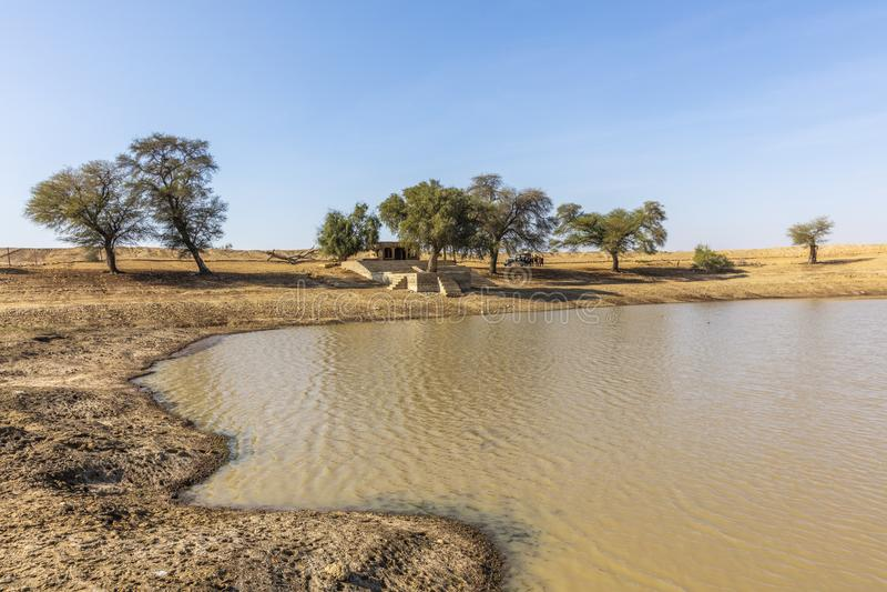 Oase in Thar-Wüste, gelegen nah an Jaisalmer, die goldene Stadt in Indien lizenzfreie stockfotografie