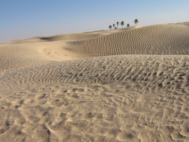 Oase in woestijn royalty-vrije stock foto's