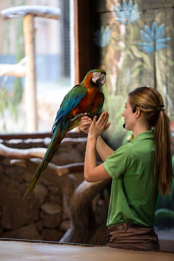 Oasen-Park - Papageienlive-show Frauen, die den großen Papageien halten Fuerteventura stockbilder