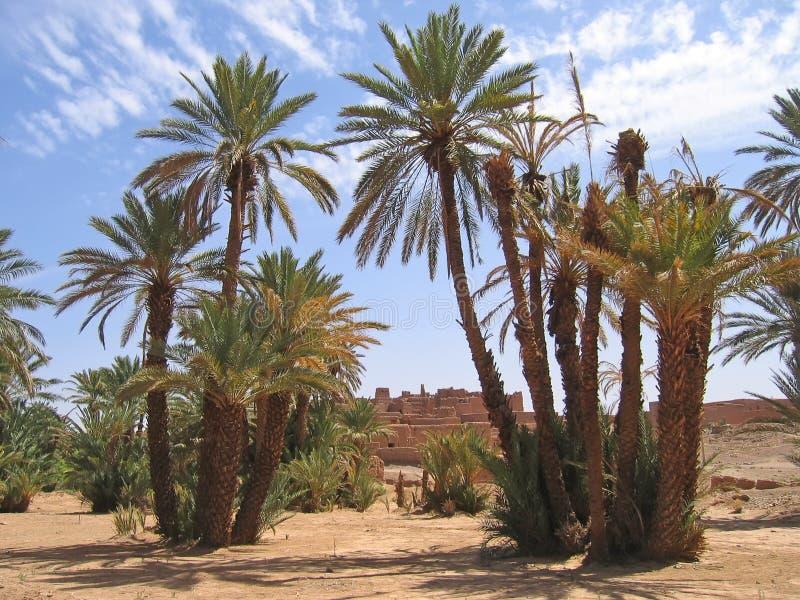Oasi del deserto con la palma fotografia stock