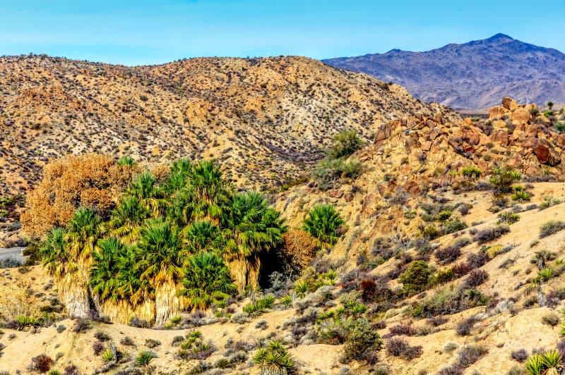 Oasi del deserto con le palme del fan fotografia stock
