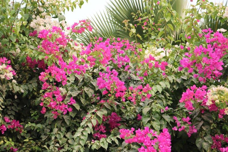 Oasi del mazzo dei fiori - DSLR fotografie stock