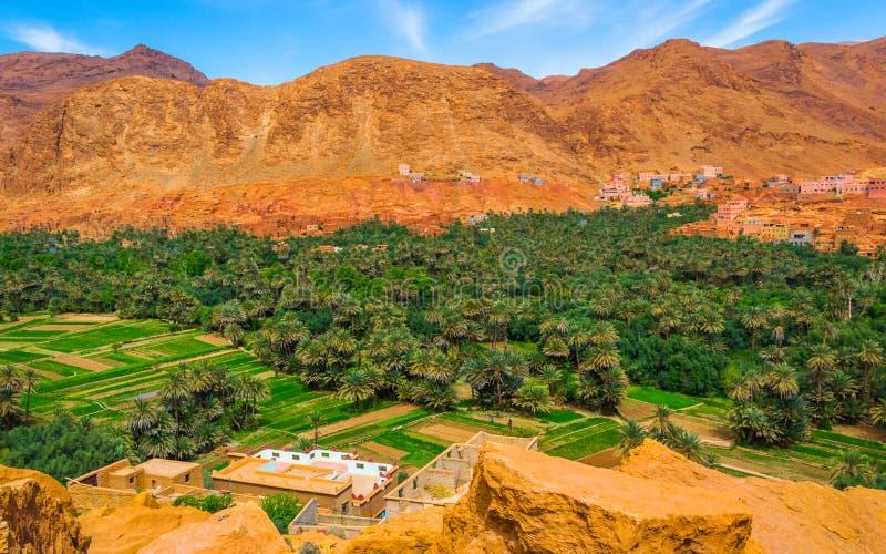 Oasi nel Marocco, vicino alle gole di Todra fotografia stock libera da diritti