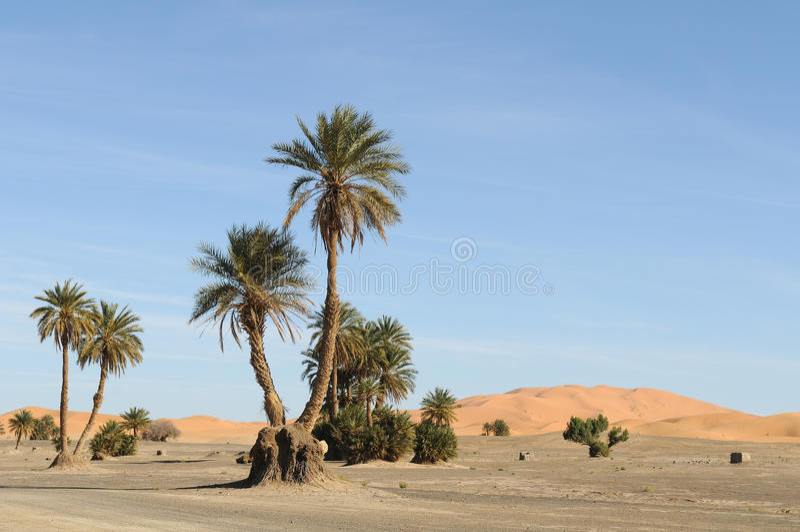 Download Oasis stock photo. Image of dunes, oasis, desert, palmtrees - 13454844