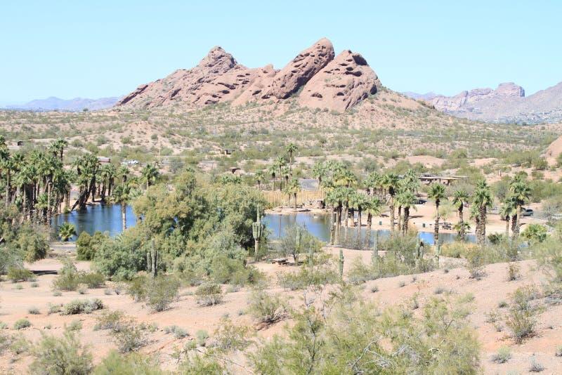 Arizona, Phoenix/Tempe: Oasis in the Sonoran Desert royalty free stock images