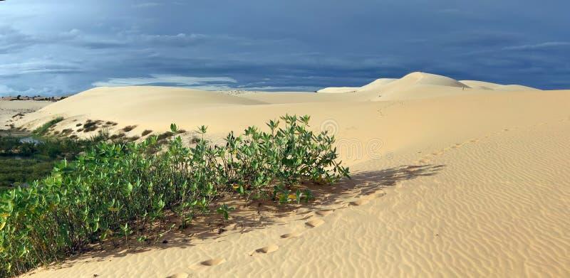 Download Oasis stock image. Image of vietnam, tropical, phanthiet - 26328851