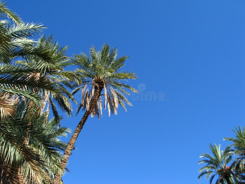 Download Oasis Stock Photo - Image: 522750