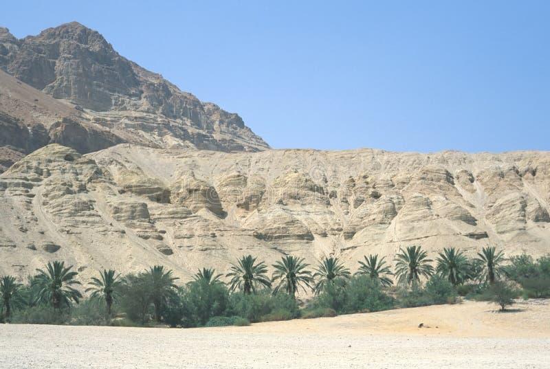 Download Oasis stock image. Image of oasis, heat, vegetation, palms - 73357