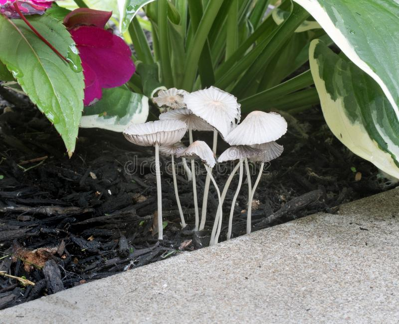 Oasis abrigado de los hongos ocultado debajo de las plantas foto de archivo libre de regalías