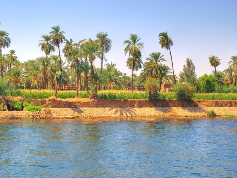 Oasis al lado del río del Nilo fotos de archivo libres de regalías