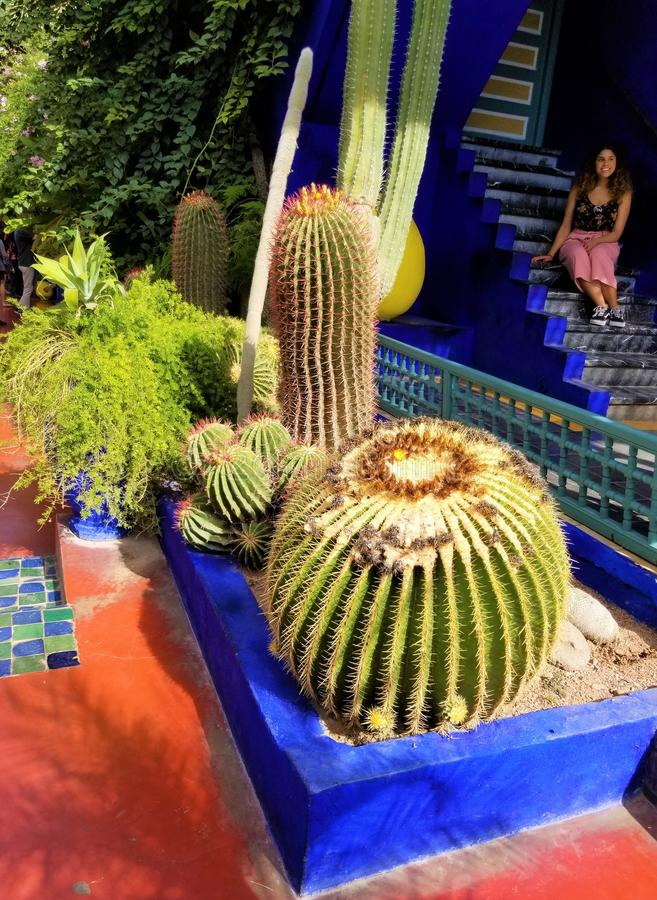 Oasis of art and landscaping at Majorelle Gardens stock images
