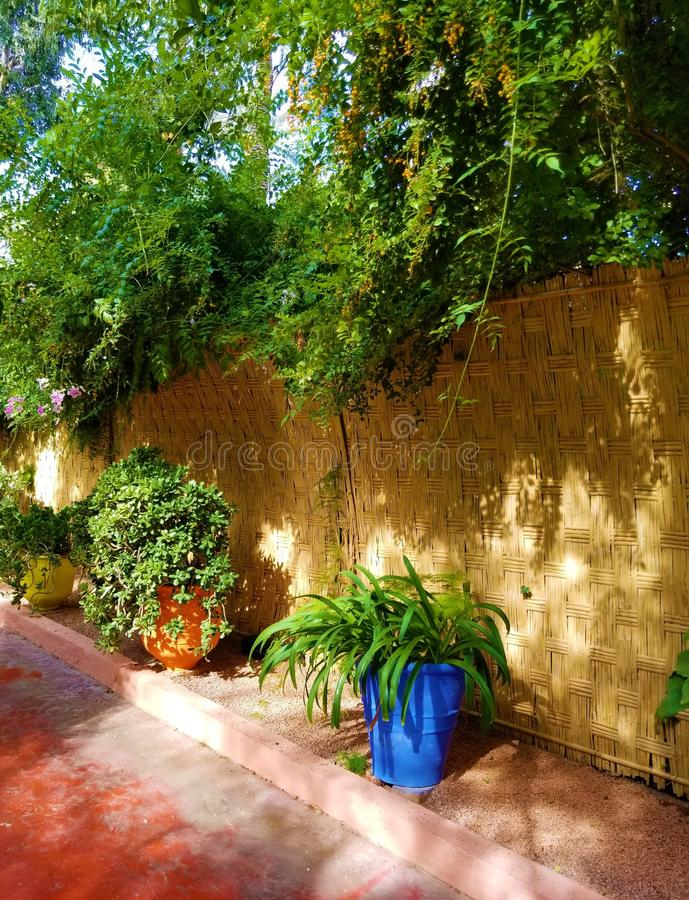 Oasis of art and landscaping at Majorelle Gardens stock photos