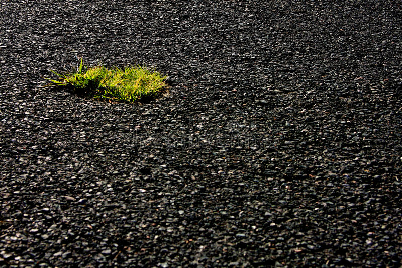 Oasis in asphalt. Small patch of grass in parking lot metaphor of or attitudes about the environment stock photo