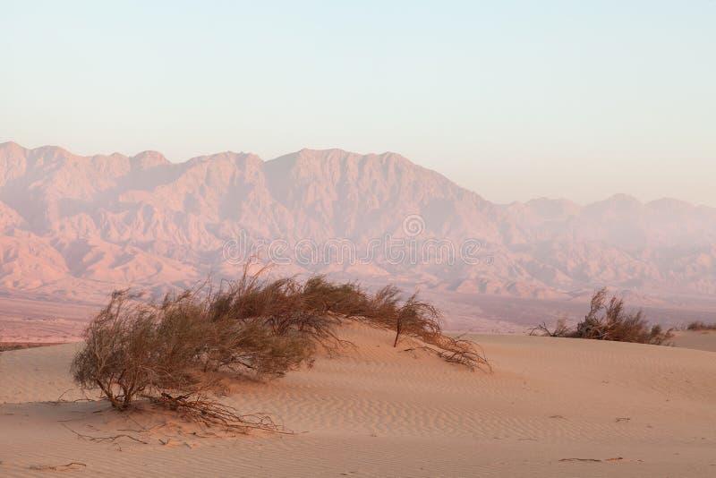 Oasis dans le désert au coucher du soleil photos stock