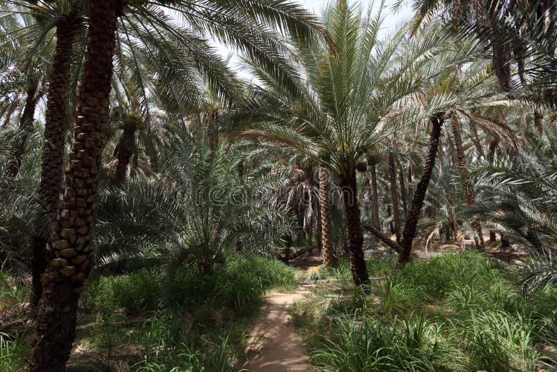 Oasis de Al Ain, Abu Dhabi imagen de archivo libre de regalías