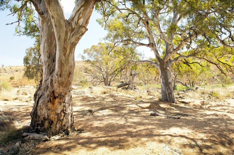Oasis del australiano interior fotos de archivo libres de regalías