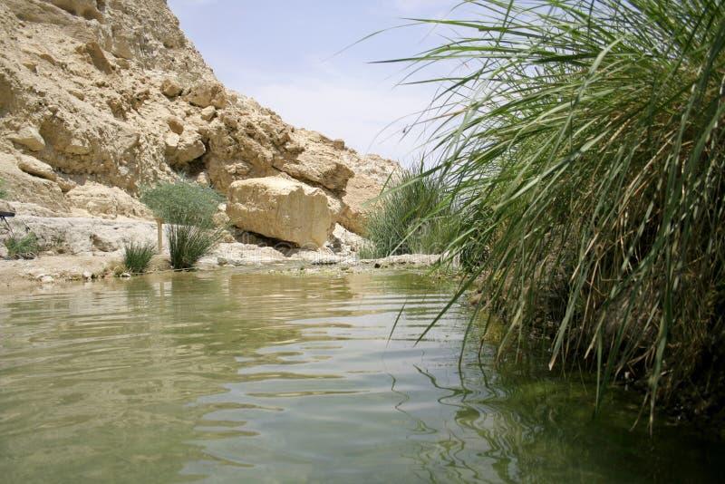 Oasis del desierto foto de archivo libre de regalías