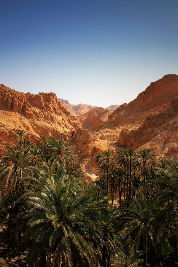 Oasis del desierto fotografía de archivo