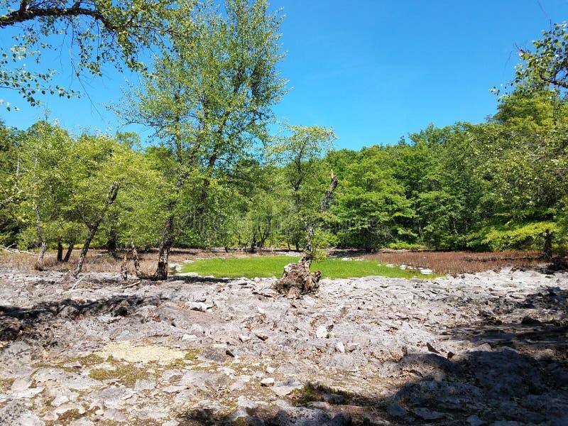 Oasis del pantano de la roca fotos de archivo libres de regalías
