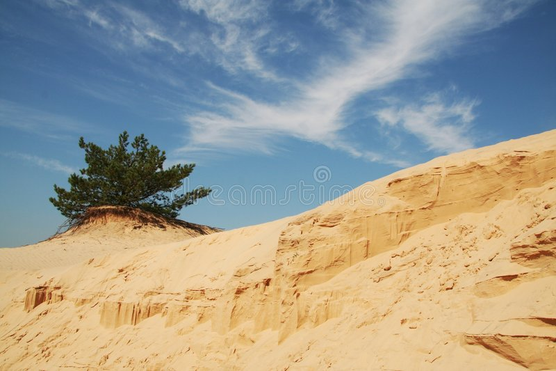 Download Oasis In The Desert_1 Royalty Free Stock Photography - Image: 1162097