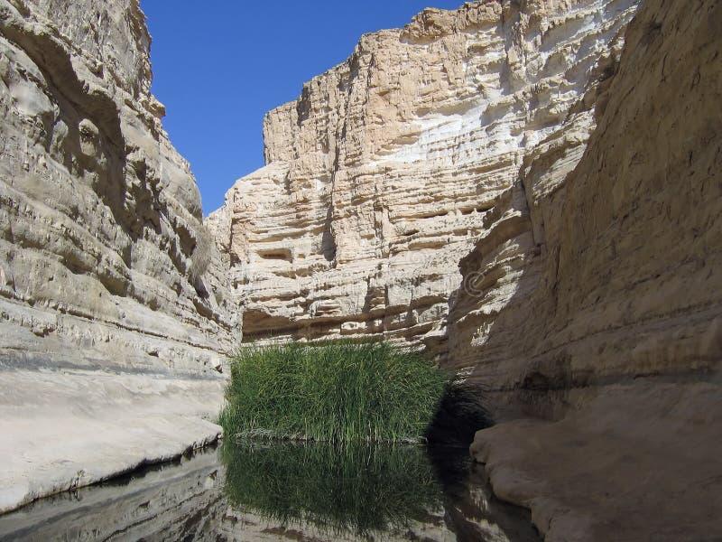 Oasis in the desert. Ein Avdat - Negev Desert Israel - Desert Oasis stock photo