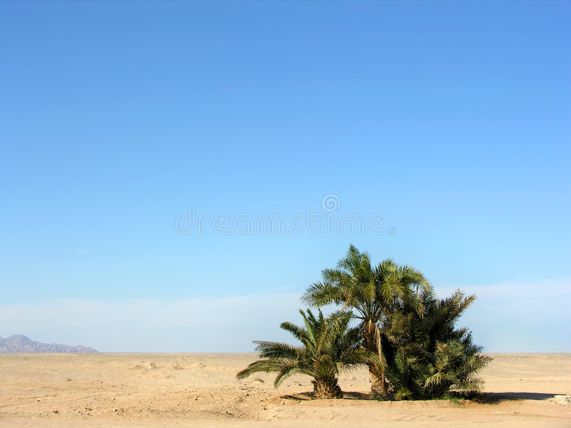 Oasis in desert stock photos