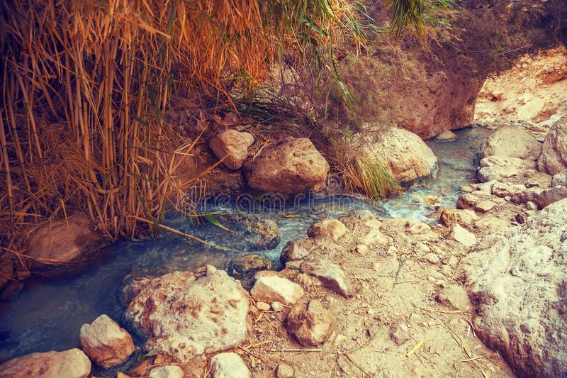 Nahal David river in Ein Gedi Nature Reserve. Israel royalty free stock photo