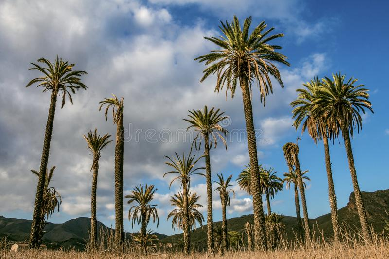 An oasis in the desert. A group of palm trees in the middle of the Almeria desert, south of Spain stock photo