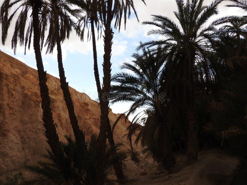 Oasis en la frontera del S?hara, cielo azul claro, T?nez, ?frica de la monta?a de Chebika fotografía de archivo