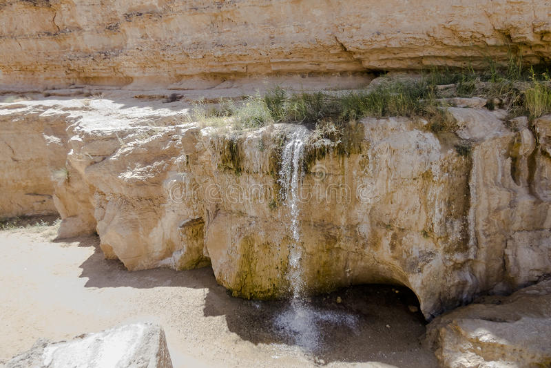 Oasis en Túnez imagen de archivo libre de regalías