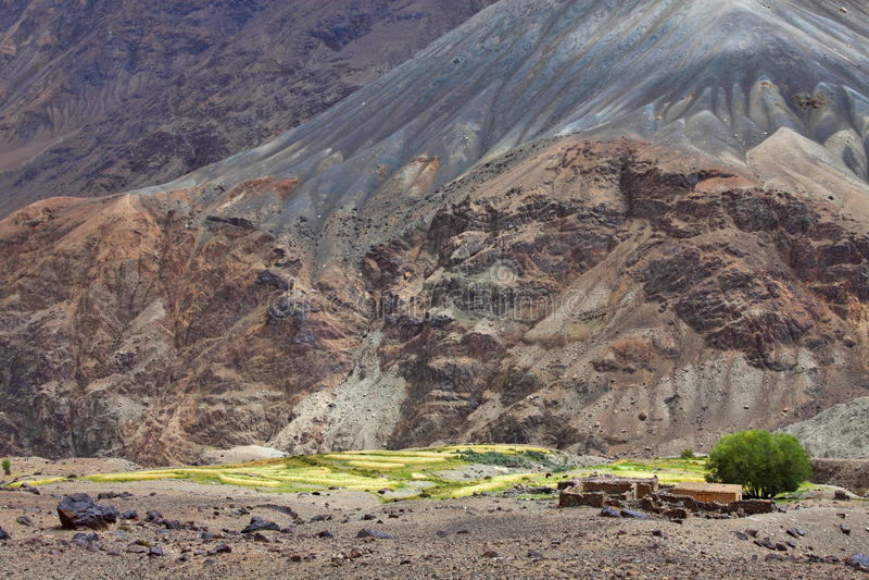 Oasis Himalayan Fotografía de archivo