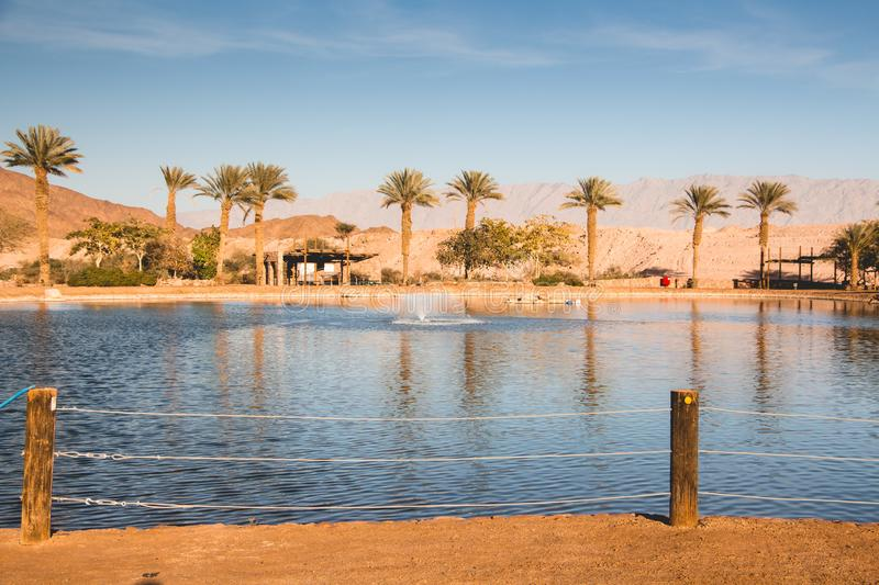 Oasis with lake, Near Eilat. Timna valley Oasis with lake, Near Eilat, Israel royalty free stock photo