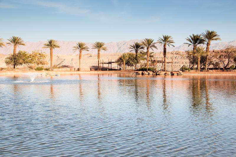 Oasis with lake, Near Eilat. Timna valley Oasis with lake, Near Eilat, Israel royalty free stock photos